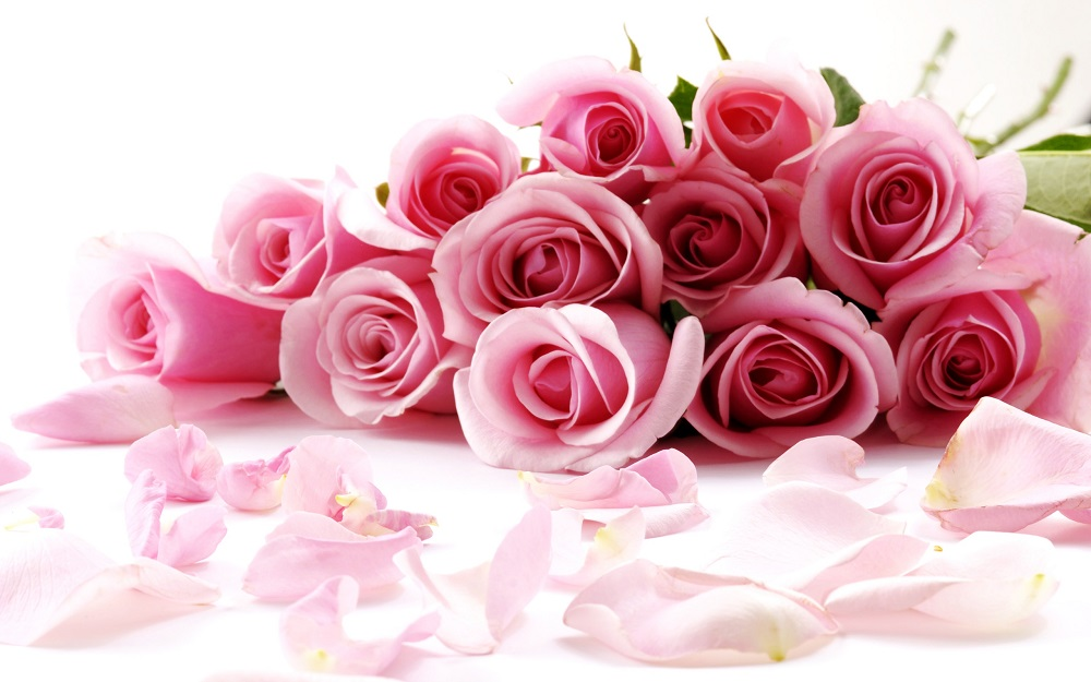 7007780-pink-rose-flowers[1]